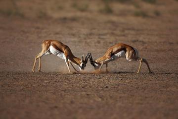 Safaritocht vanuit Kaapstad naar Aquila Game Reserve