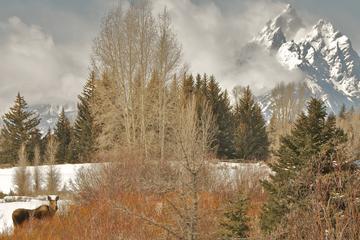 Tour van een halve dag Grand Teton National Park bij zonsopgang