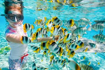 Full-Day Snorkeling Trip at Giftun ...