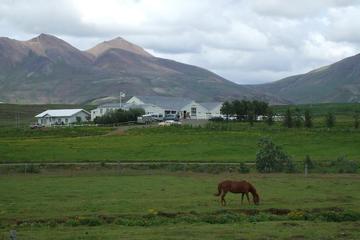 Hästridning på Island
