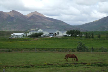 Rijden op een IJslands paard