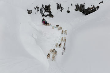 Dogsledding day in Ilulissat