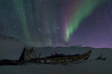 Dogsledding nigh trip in Ilulissat