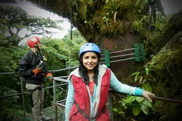 Combo Tour: Monteverde Cloud Forest Nature Tour and Night Walk