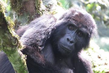 15-Day Tour of Uganda and Rwanda...