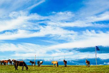 8-Day Tour: Taste of Mongolia