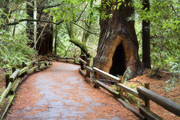 San Francisco Super Saver: Muir Woods and Wine Country med valgfri...