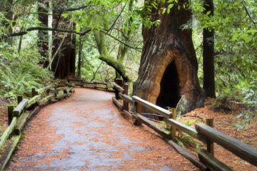 San Francisco supertilbud: Muir Woods og Wine Country-tur