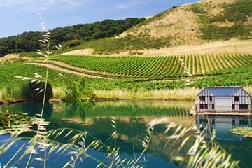 Visite semi-privée en petit groupe de la région viticole au départ de...