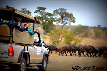 Half-Day Kruger National Park Safari from Komatipoort