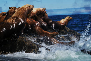 Seal Colony 3-Hour Boat Rental for 5...