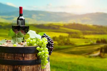 Istra Wine Tour from Rovinj
