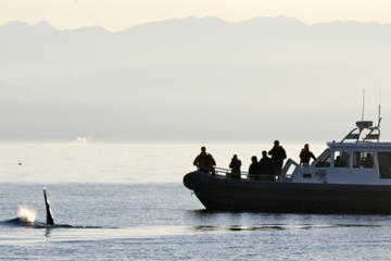 Winter Whales and Wildlife Tour in Vancouver Island