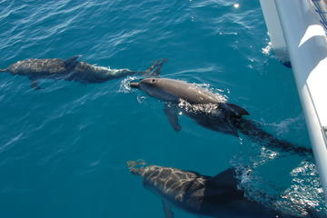 Hervey Bay, the Great Sandy Strait and Fraser Island Dolphin Watching...