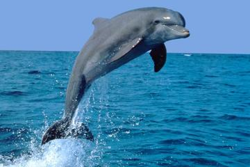 Dolphin Experience in Open Sea and South West Tour of Mauritius including Lunch