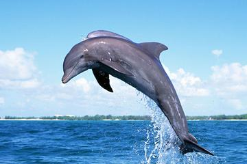 Full-Day Dolphin Watching Cruise in...