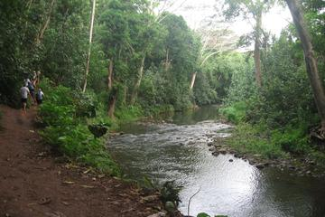 Wailua River and Secret Falls guided...