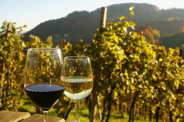 Excursão privada: degustação de vinhos austríacos em uma...