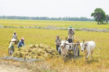 Nha Trang Countryside Biking Safari Full-Day Tour