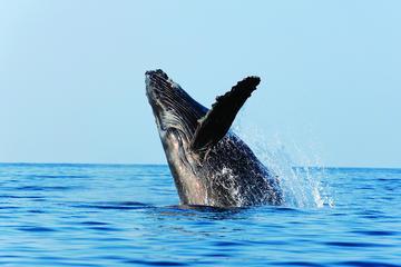 Best of Alaska Whale Watching Adventure