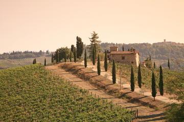 Halvdagstur til Chianti med tradisjonell toskansk middag og vin fra...