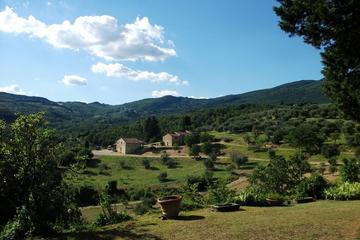 Halvdagsvinrundtur i Chianti från Florens