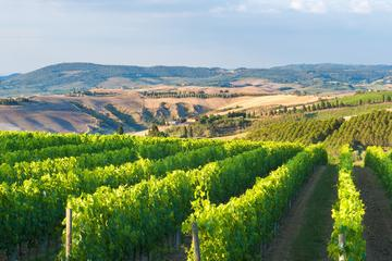 Private Chianti Authentic Experience with Two Delicious Wine Tastings and Two Charming Medieval Villages