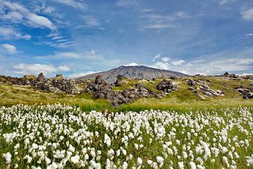 Excursión de un día a la península de Snaefellsjokul desde Reikiavik...