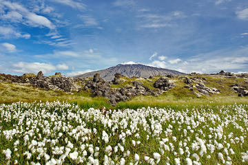 Snaefellsjokul Peninsula Day Trip from Reykjavik: Kirkjufell Mountain...
