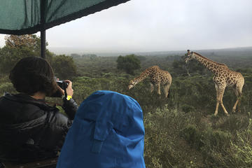 Full-Day Wildlife Safari, Craft Beer...