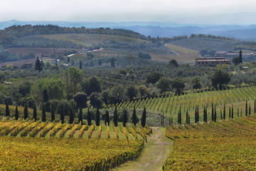 Chianti Half-Day Private Wine Tour