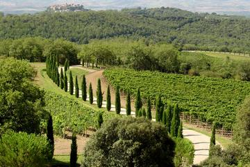 Private Half-Day Tour of Montalcino and Crete Senesi from Siena