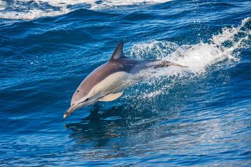 Dolphin Watching Tour and Güi Güi...
