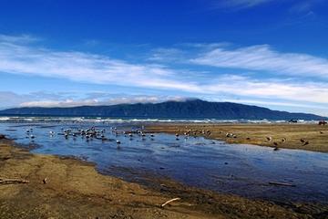 Kapiti Gold Coast Tour from Wellington