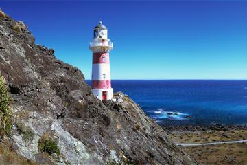 Tour door Palliser Bay en schitterende kustlocaties vanuit Wellington