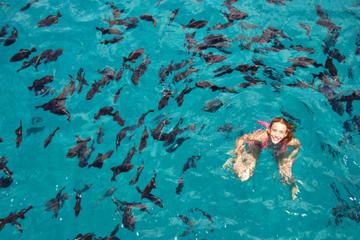Cruzeiro de catamarã na Baía de Sosua e mergulho com snorkel