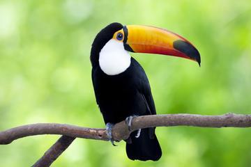 Entrada y visita guiada de Manatí Park