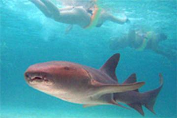 Experiência com as arraias e tubarões no Marinarium