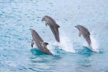 Half-Day Dolphin Island Tour from Punta Cana