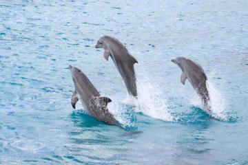 Tour di mezza giornata presso l'Isola dei Delfini con partenza da