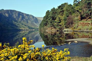 Excursão em Wicklow, Powerscourt e Glendalough saindo de Dublin