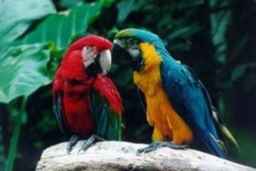 Excursão e bilhete para o Parque das Aves das Cataratas do Iguaçu
