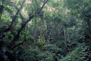 Excursión ecológica al jardín botánico de Río de Janeiro y al bosque...