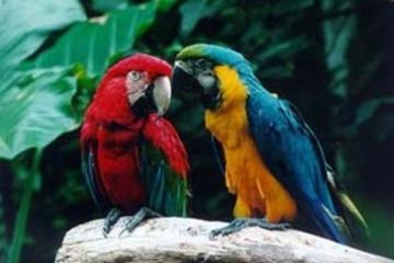 Iguassu Falls Bird Park General Admission Ticket and Tour