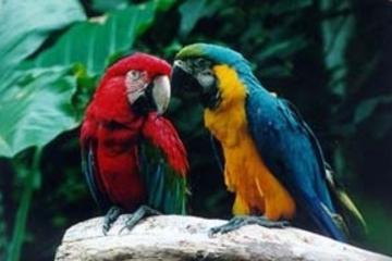 Iguassu Falls Vogelpark allgemeine Eintrittskarte und Tour