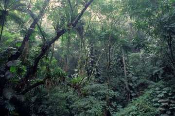 Jardin botanique de Rio de Janeiro et éco-visite dans la forêt...