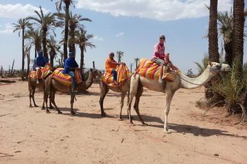 Promenade à dos de chameau au coucher du soleil de Marrakech à la...