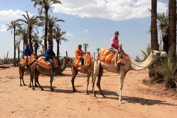 Sunset Camel Ride Tour in Marrakech ...