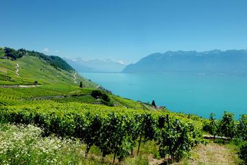 Private Tour Swiss Riviera