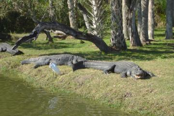 Everglades Tour Through The Big Cypress National Preserve